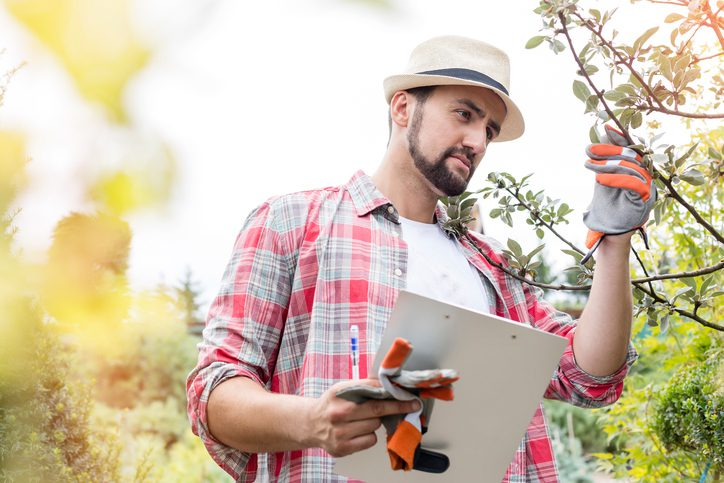 How Much Do Landscaping Services Cost?